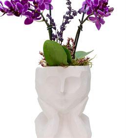Geometrik Saksıda Mini Ficus Bonsai