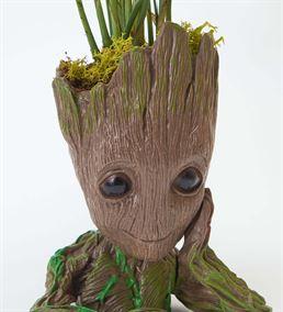 Groot Saksı Chamadorea Bitkisi Tasarımı