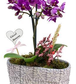 Güzel Annem Çift Dal Mini Orkide