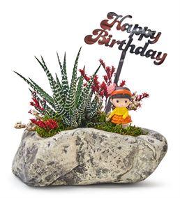Happy Birthday Serisi Bayan Haworthia Sukulent