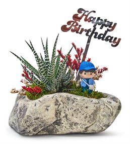 Happy Birthday Serisi Erkek Haworthia Sukulent