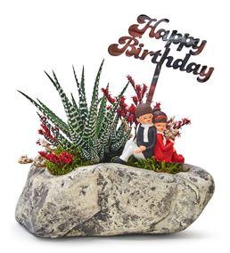 Happy Birthday Sevgililer Haworthia Sukulent