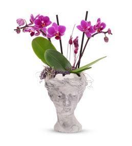Helen Serisi Taş Saksıda Çift Dal Mini Orkide