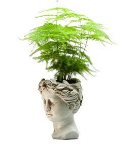 Helen ve Kuşkonmaz(Asparagus) Tasarım Aranjmanı