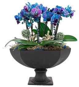 Katrina Mini Mavi Orkideler Serisi