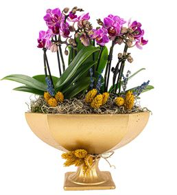Katrina Mini Mor Orkideler Serisi Gold