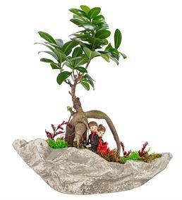 Kaya Serisi Sırt Sırta Bonsai Tasarım