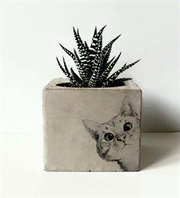 Kedi Baskılı Beton Saksıda Sukulent