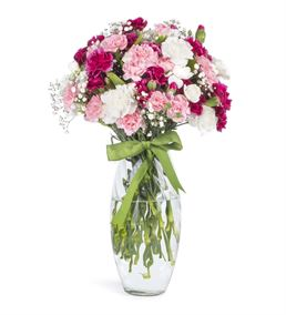 Kokulu Renkli Ada Karanfilleri Çiçeği