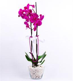 Konik Cam Fanusta Mor Orkide Tasarım