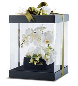Kutu Dolusu Beyaz Orkideler