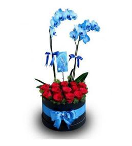 Kutuda Kırmızı Güller Ve Mavi Orkide