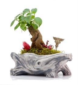L'arbre Doktor - Mini Bonsai
