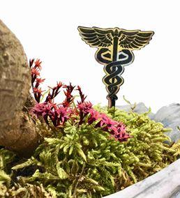 L'arbre Doktor - Mini Bonsai