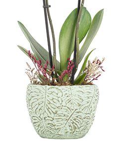 Leaf Serisi Mavi Orkide Tasarım