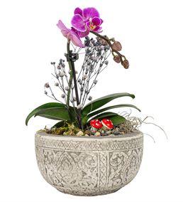 Lost Serisi Tek Dal Mini Orkide Tasarım