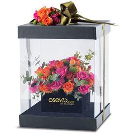 Maggiore Colours Roses