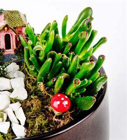 Mini Bahçem Sukulent Aranjmanı