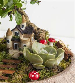 Minyatür Bahçe Sukulent Aranjmanı
