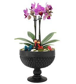 Rita Serisi Mini Mor Orkide Serisi