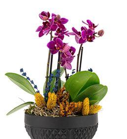Rita Serisi Mini Mor Orkideler - Siyah