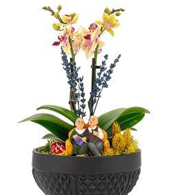 Rita Serisi 2 Dal Mini Sarı Orkide Serisi
