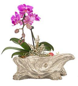 Rock Serisi Tek Dal Mini Orkide Tasarım