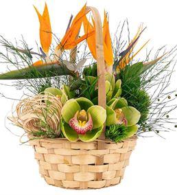 Sepette Starliçe ve Orkide Tasarım Çiçek Sepeti