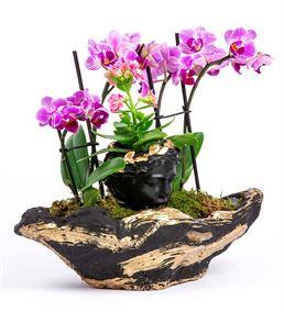 Siyah Gold Canyon Saksıda dört dal Mini Orkide