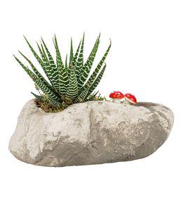 Stone Serisi Haworthia Tasarım
