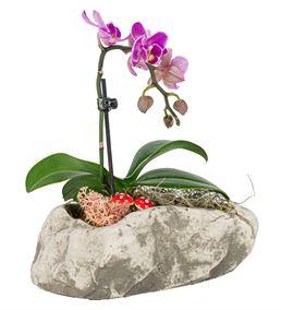 Stone Serisi Tek Dal Mini Orkide Tasarım