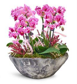 Taş Saksıda 8 Dal Mini Mor Orkide Aranjmanı