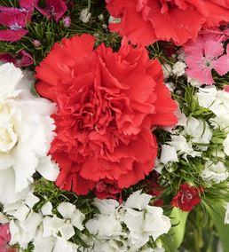 Tatlı Düşler Karanfil Çiçek Aranjmanı