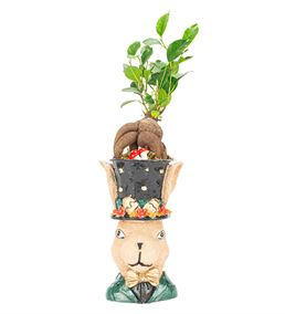 Tavşan Serisi Bonsai Tasarım-Gold
