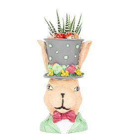 Tavşan Serisi Haworthia Tasarım-Griy