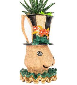 Tavşan Serisi Haworthia Tasarım - Siyah