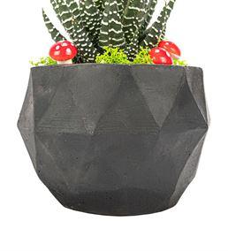 Triangle Serisi Haworthia Sukulent Tasarım