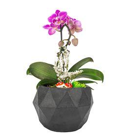 triangle Serisi Tek Dal Mini Orkide Tasarım