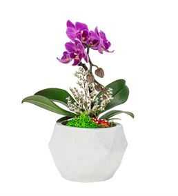 triangle Serisi Tek Dal Mini Orkide Tasarım-White