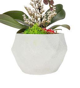 Triangle Serisi Tek Dal Mini Orkide Tasarım -White