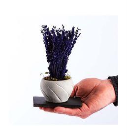 Trio Bend Saksı Serisi Kokulu Mini Lavanta Çiçeği