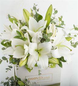 Zarif ve Güzel Kokulu Beyaz Lilyumlar