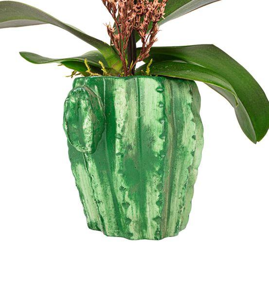 Mini Cactus Serisi Tek Dal Orkide Tasarım