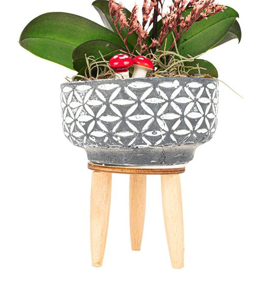 Three Legs Tek Dal Mini Orkide Tasarım