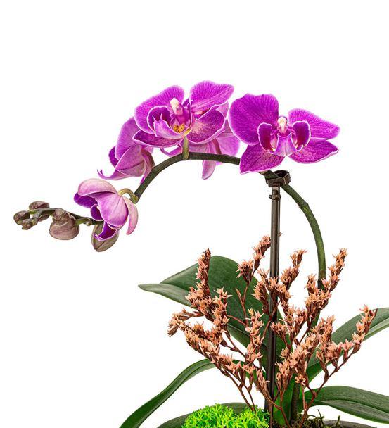 Aging Serisi Mini Orkide Ve Sukulent Tasarım-Gold