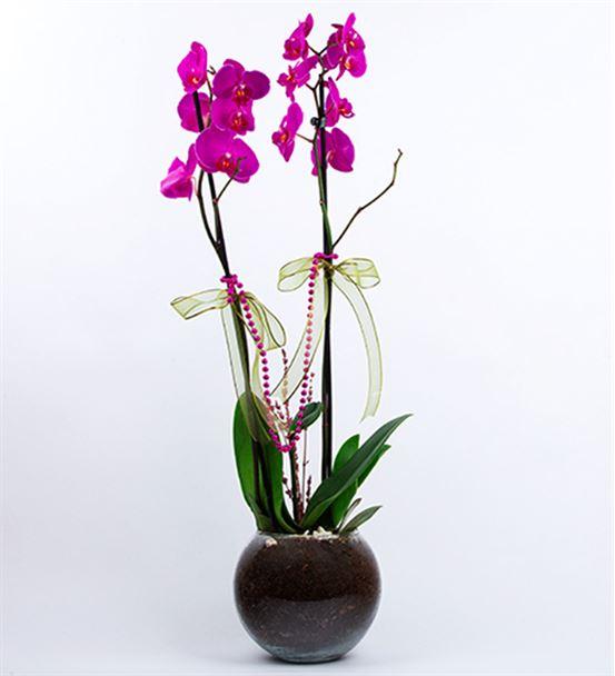 Akvaryum Fanusta Mor Orkide Tasarım