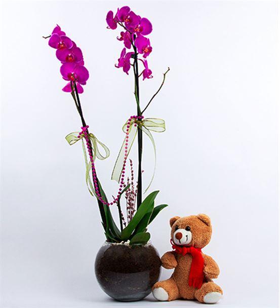 Akvaryum Fanusta Mor Orkide Ve Pelüş Ayı  Tasarım