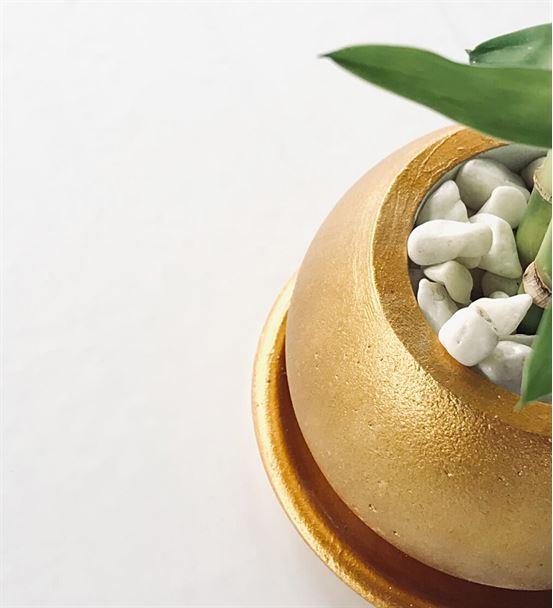 Altın Renkli Beton Saksıda İkili Şans Bambusu