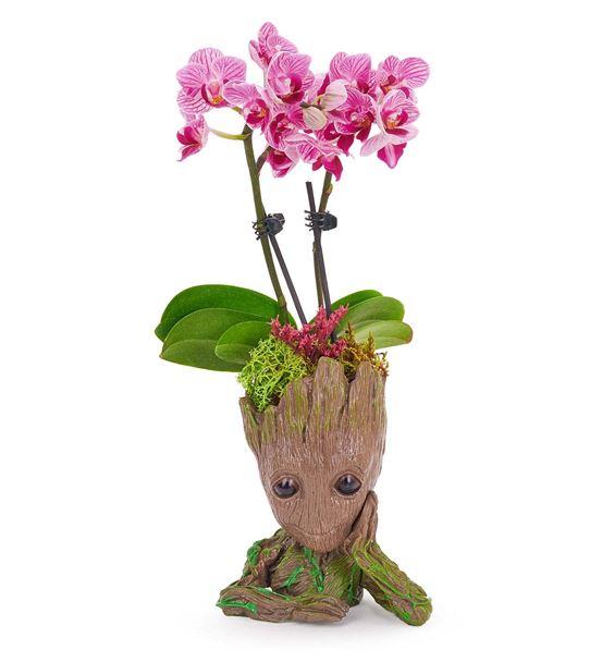 Baby Groot Mini 2 Dal Mor Orkide