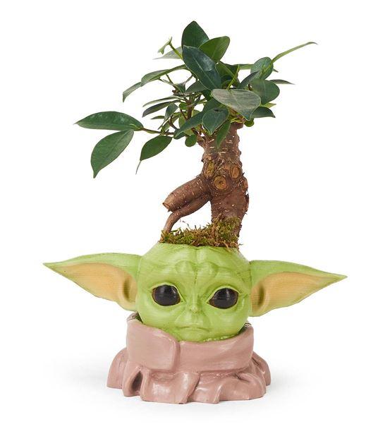 Baby Yoda ve Ficus Bonsai Aranjmanı